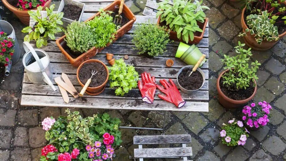 Essential Gardening tools and supplies for Terrace Gardening